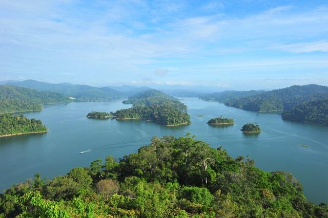 Nick Baker – Malaysia Rainforest