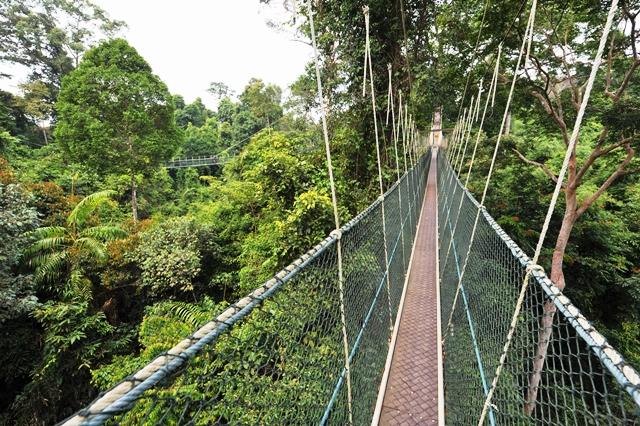 Taman Negara – seit 130 Millionen Jahren erhaltenes Ökosystem