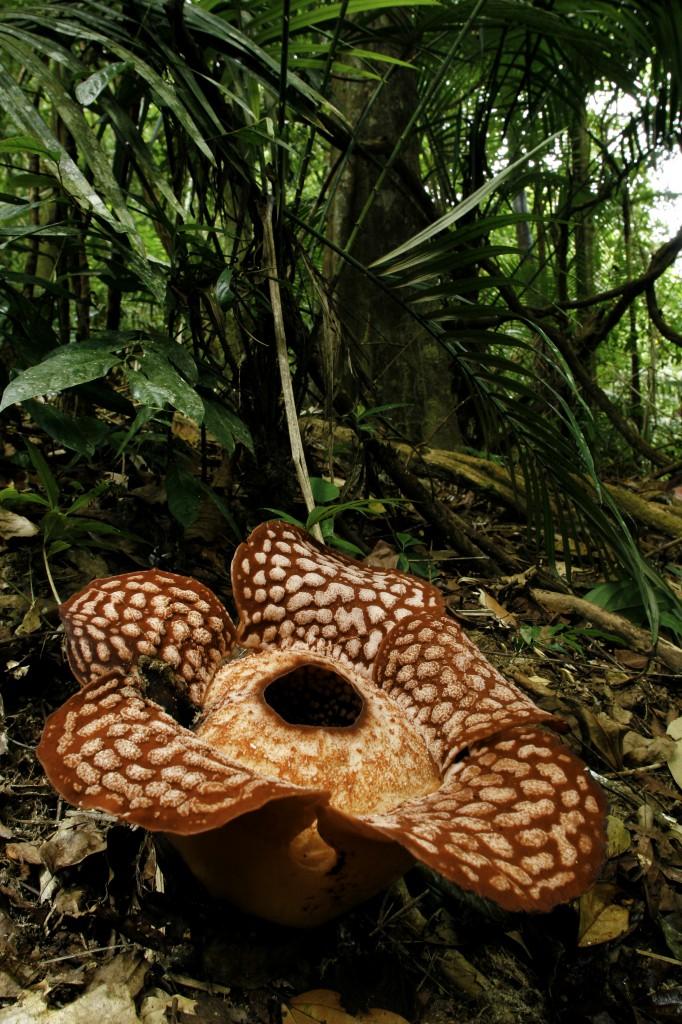 Malaysia lüftet das bestgehütete Ökotourismus-Geheimnis: Royal Belum Regenwald