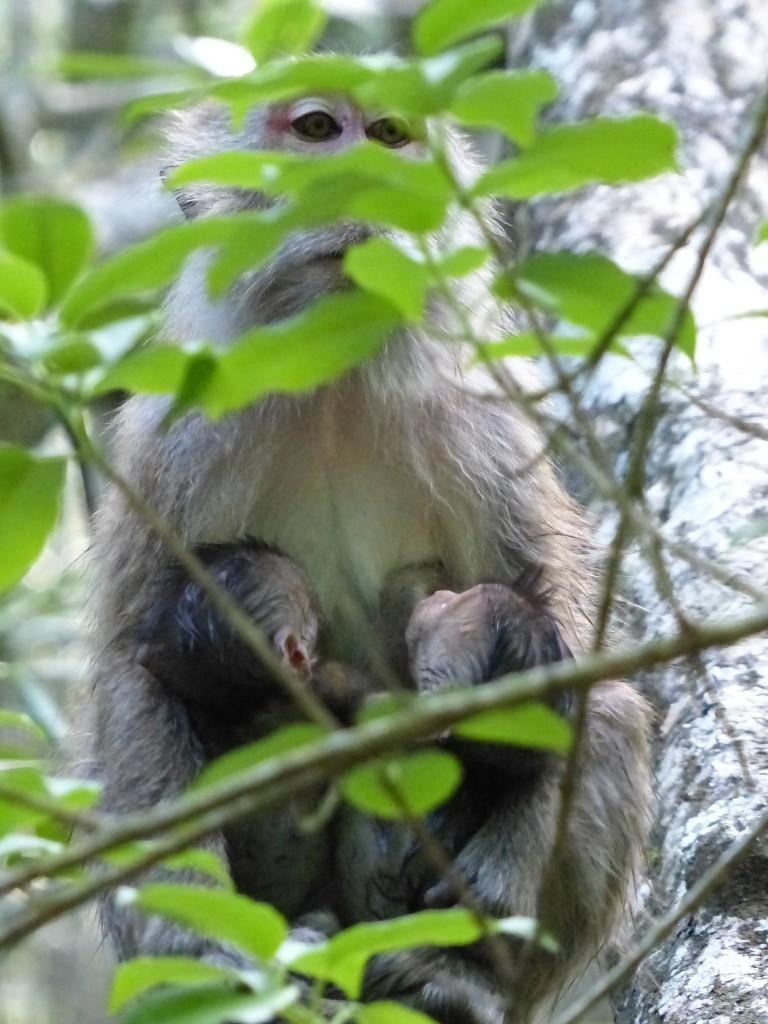 Baby-Affen