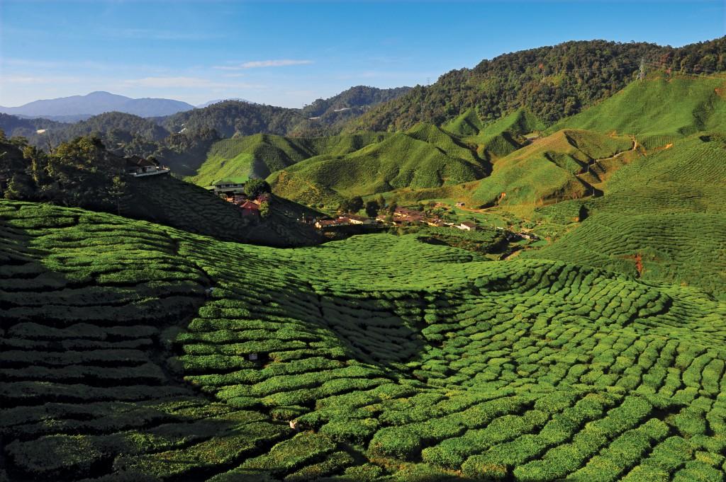 Malaysisch to go! – Der Wortschatz für die Reise durch Plantagen des Cameron Highlands