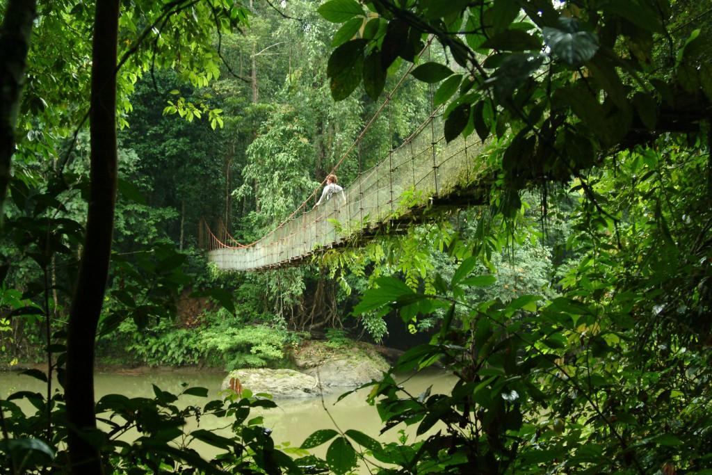 Wir stellen vor: Kinabatanga River tour