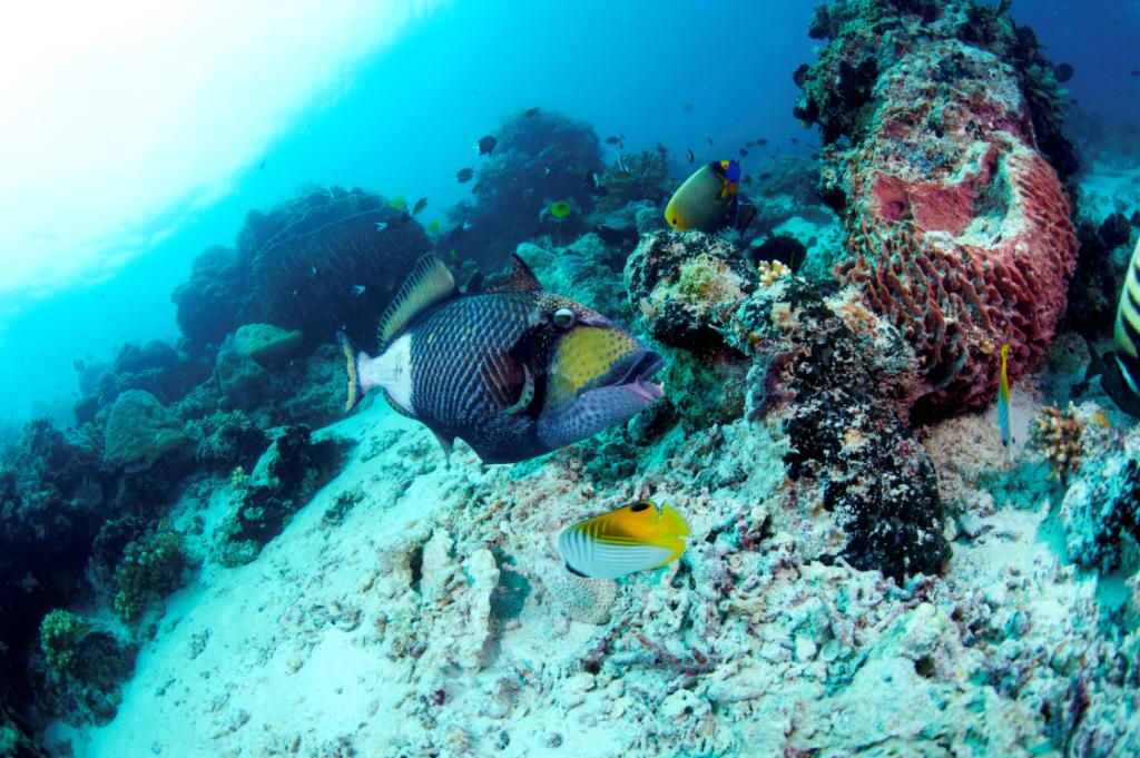 Wir stellen vor: Tun Mustapha Park — größter Meeresschutzpark Malaysias