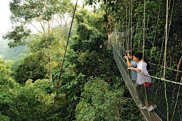 Zeit zum Staunen: Der Canopy Walkway im Taman Negara-Nationalpark