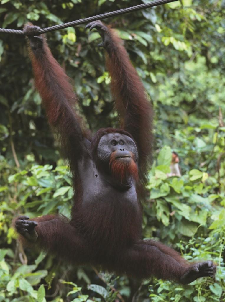10 Gründe warum Kuching euer nächstes Reiseziel sein sollte