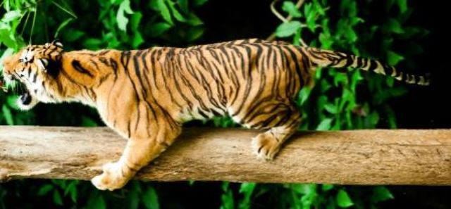 Johor – Abenteuer in der Natur