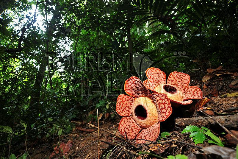 Malaysia Fauna & Flora: weiß, blau-türkis und strahlend grün