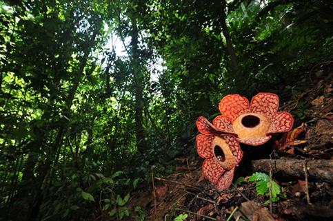 Auf den Spuren der Tiere in Malaysia
